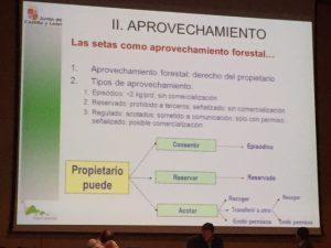 Aprovechamiento forestal según el proyecto de decreto de regulación de la micología en Castilla y León