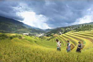 Mujeres en la agricultura. Día Internacional de la Mujer Rural